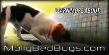 Canine Bed Bug Exterminator in San Diego