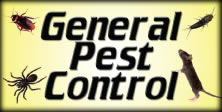 Pest Information in San Diego County